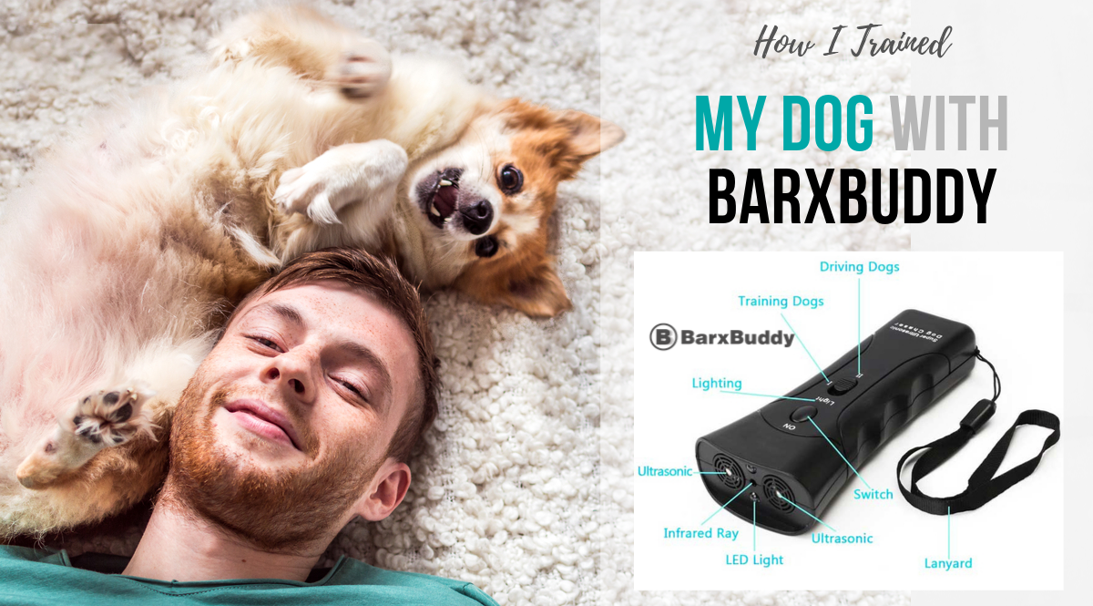 How I Trained my Dog with BarxBuddy