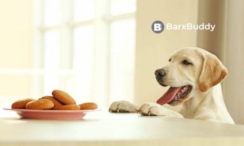 Our Favourite Dog Treat Recipes from BarxBuddy for Training Purposes